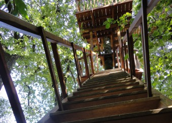 weekend cabanes arbres